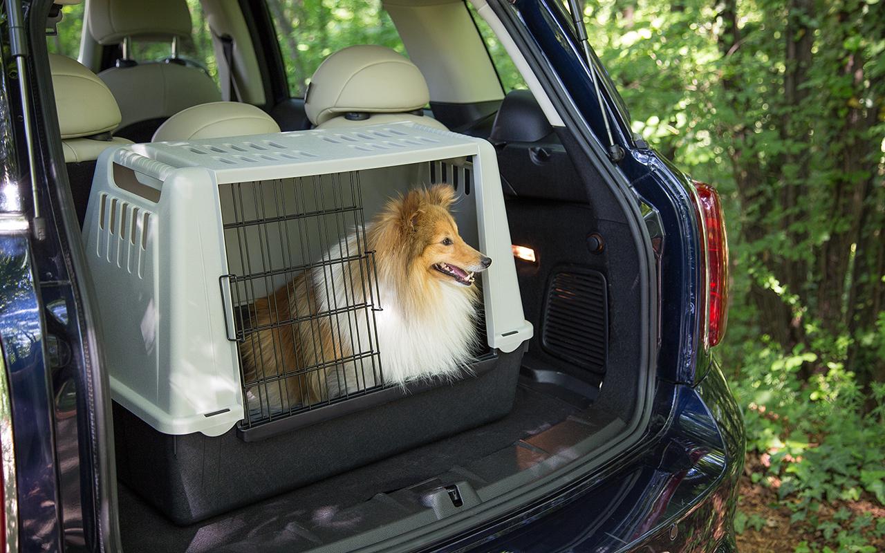 Viaggiare col cane in auto: cosa portare