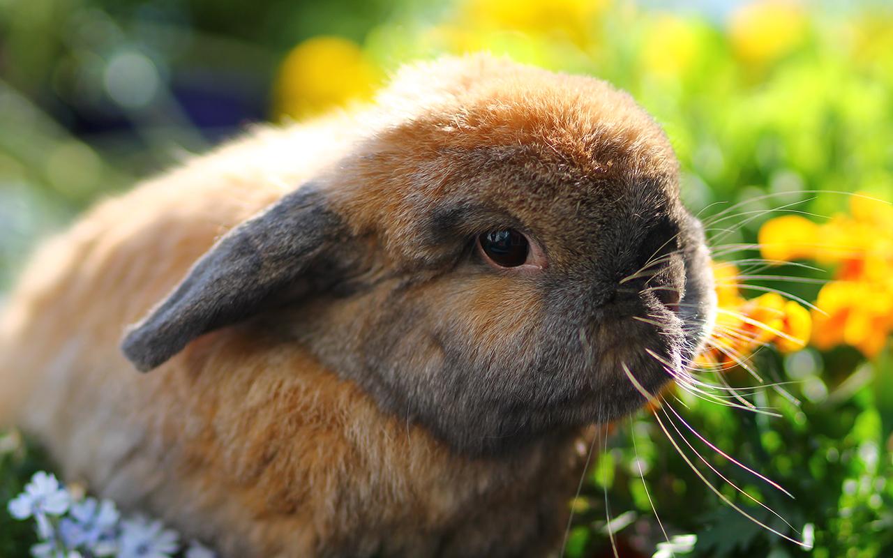 Il coniglio in giardino guida alla progettazione for Animali pucciosi