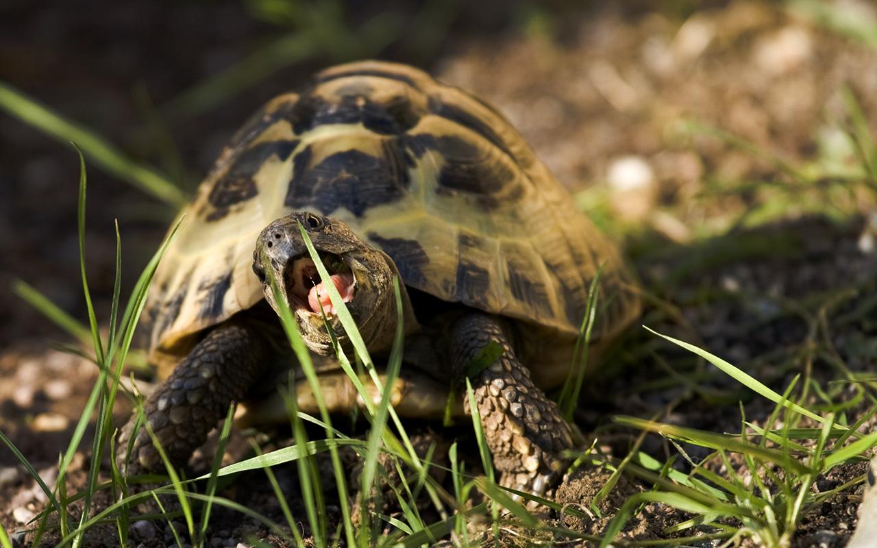 Parco nazionale del Circeo: gli animali del parco