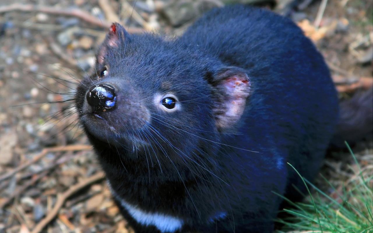 Animali australiani 10 specie uniche e pucciose for Animali pucciosi