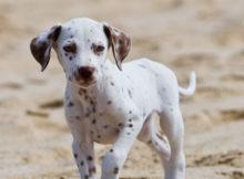 cani_in_spiaggia-animali_pucciosi