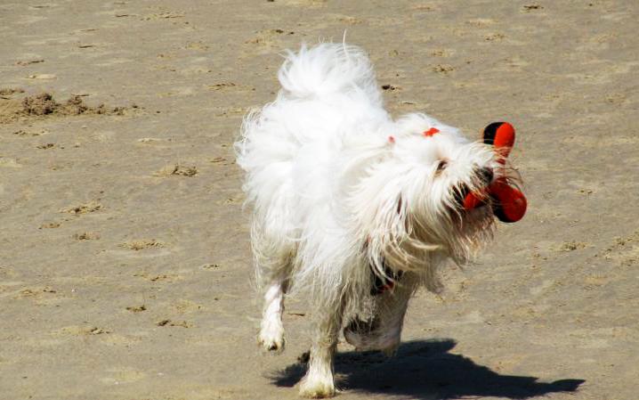 cani_in_spiaggia-animali_pucciosi_viaggio_giochi