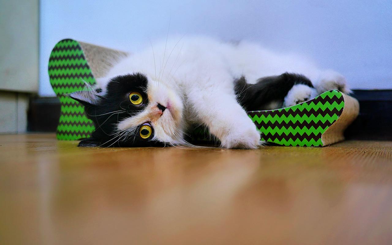 5 tiragraffi facili da pulire animali pucciosi for Animali pucciosi