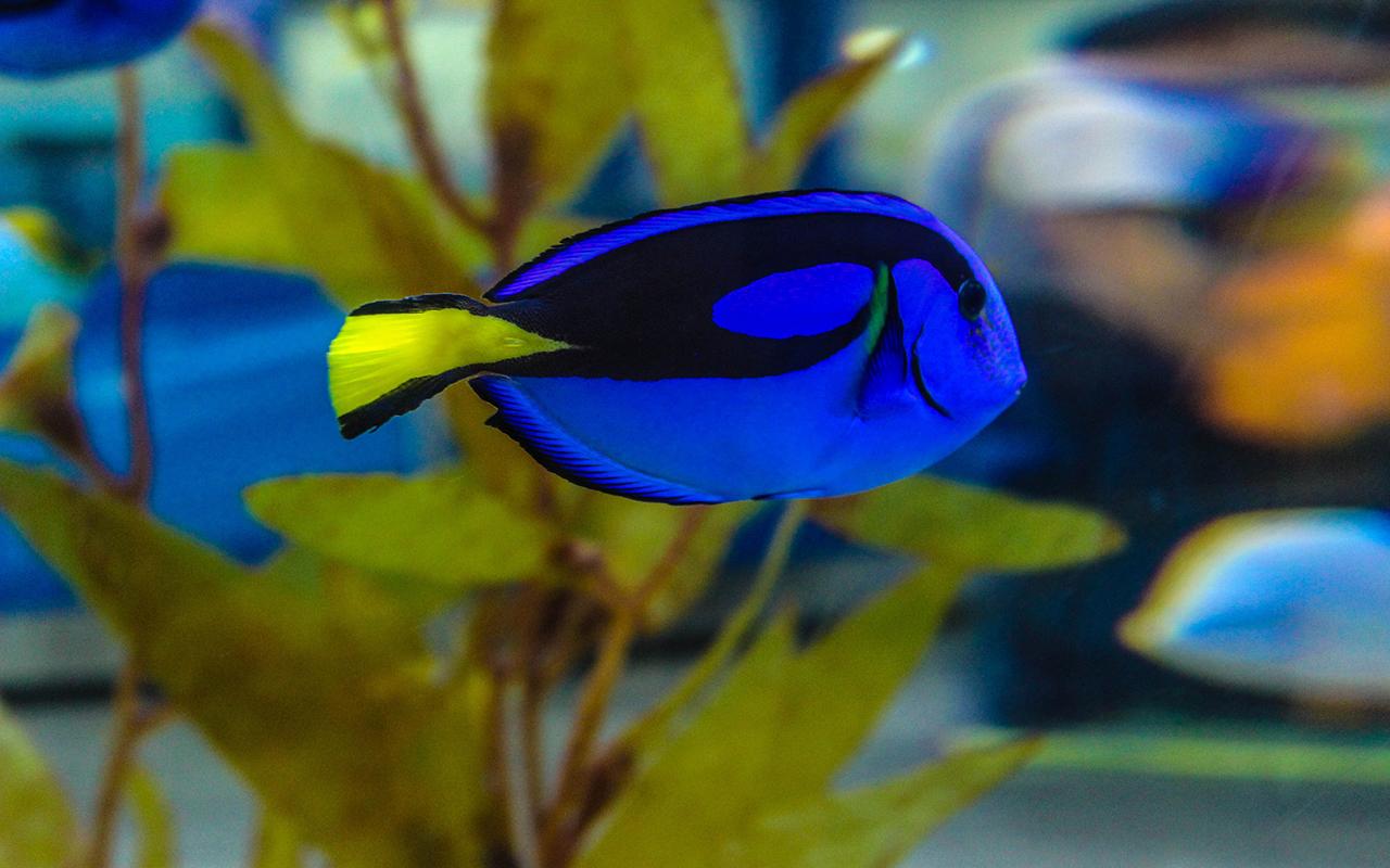 Un acquario da film i pesci di alla ricerca di dory - Pagina di colorazione del pesce ...
