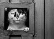 Come scegliere la giusta gattaiola: istruzioni per l'uso