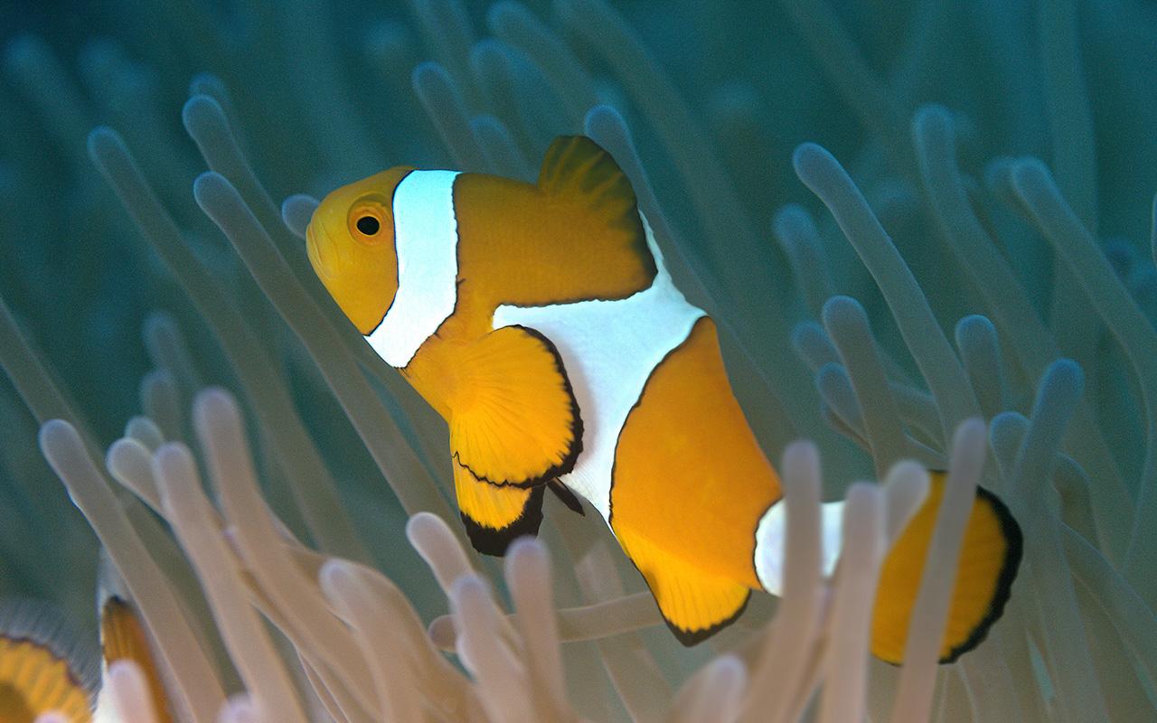 Un acquario da film i pesci di alla ricerca di dory for Immagini pesciolini