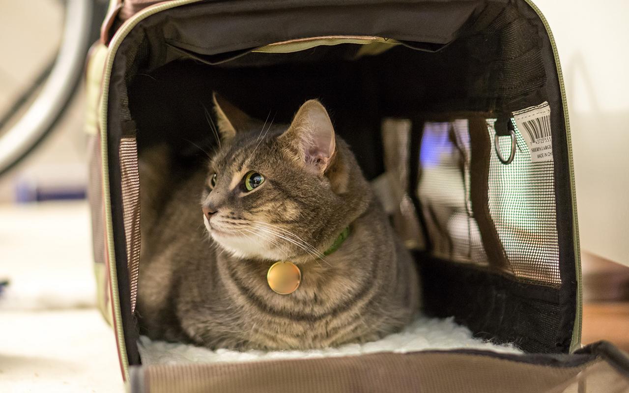 Viaggiare con gli animali è semplice e sicuro!