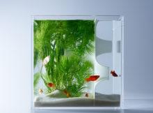 Acquari 3D: le splendide opere di Haruka Misawa