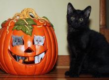 Il gatto nero, vera star di halloween