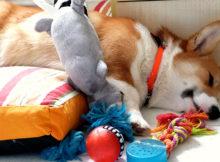 Giocare con il cane, semplici passi per socializzare assieme