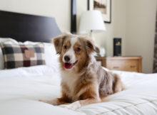 In albergo con il cane in montagna!