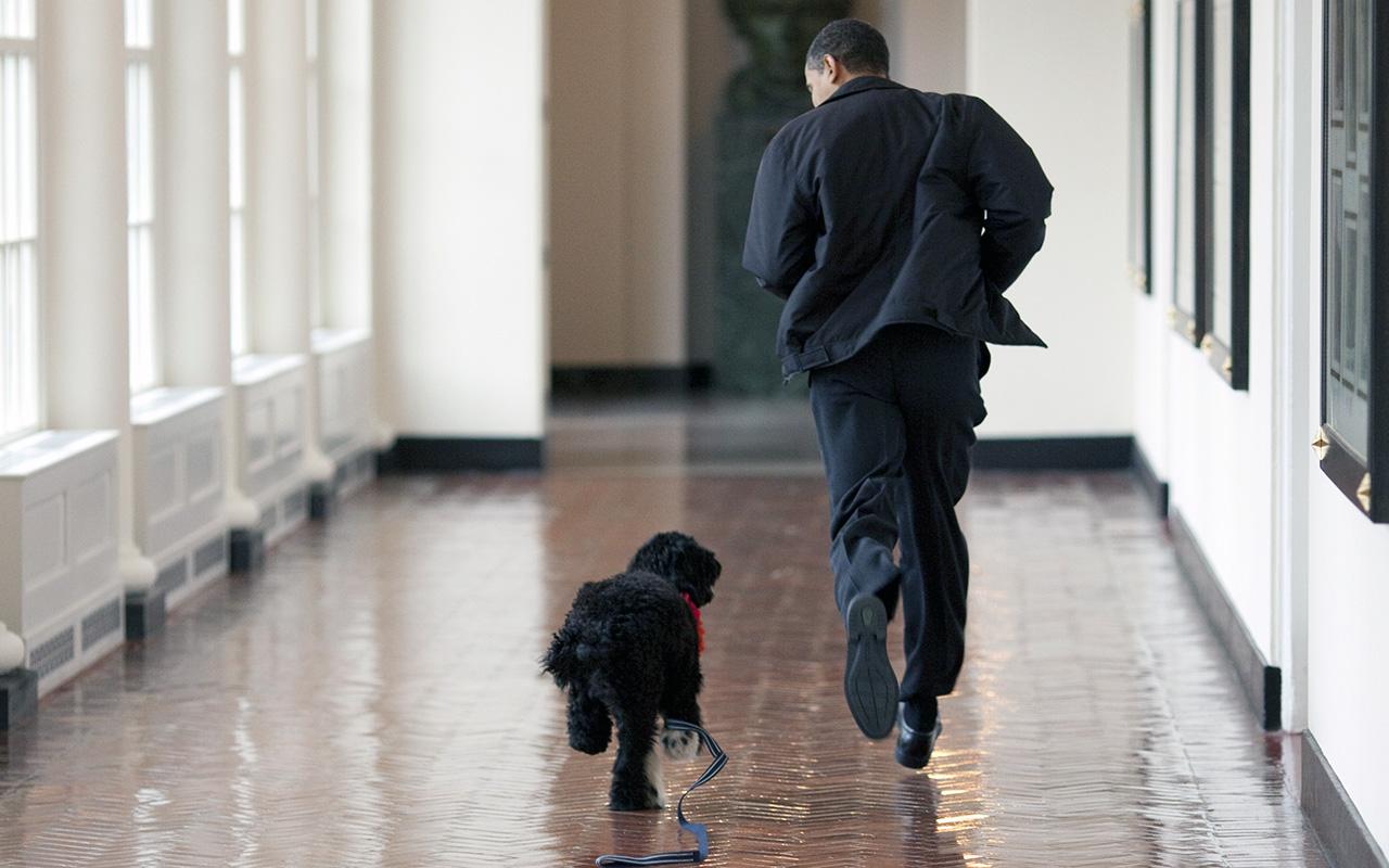 Il cane del presidente first pets alla casa bianca for Casa progetta il trotto del cane