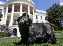 Il cane del presidente, first pets alla casa bianca