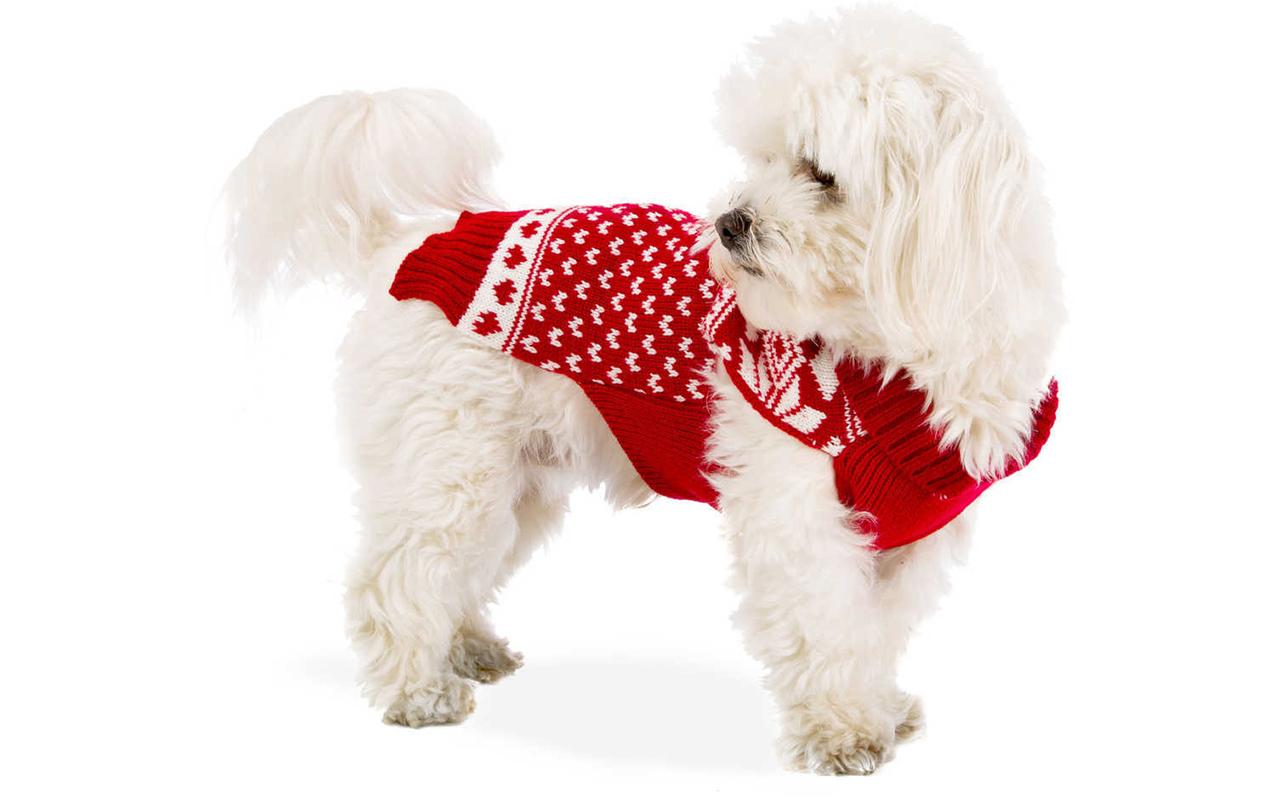 Christmas 4 Pets: Idee per un natale a quattro zampe