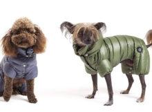 Cappotti per cani: l'inverno sta arrivando!