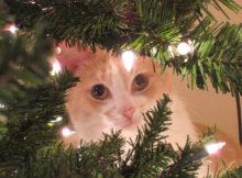 Albero di Natale a prova di gatto, cane e coniglio!