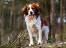 Attività col cane in montagna: idee per vacanze in alta quota!