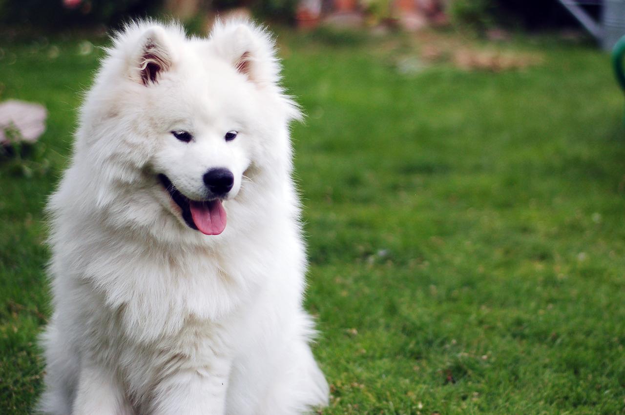 Cani nordici da slitta: tutte le razze a confronto!