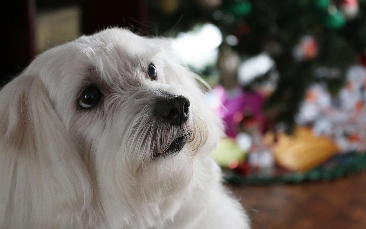 Cani anallergici: le razze adatte a chi soffre di allergie