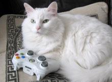 Giocare con il gatto: idee per divertirsi col proprio felino!