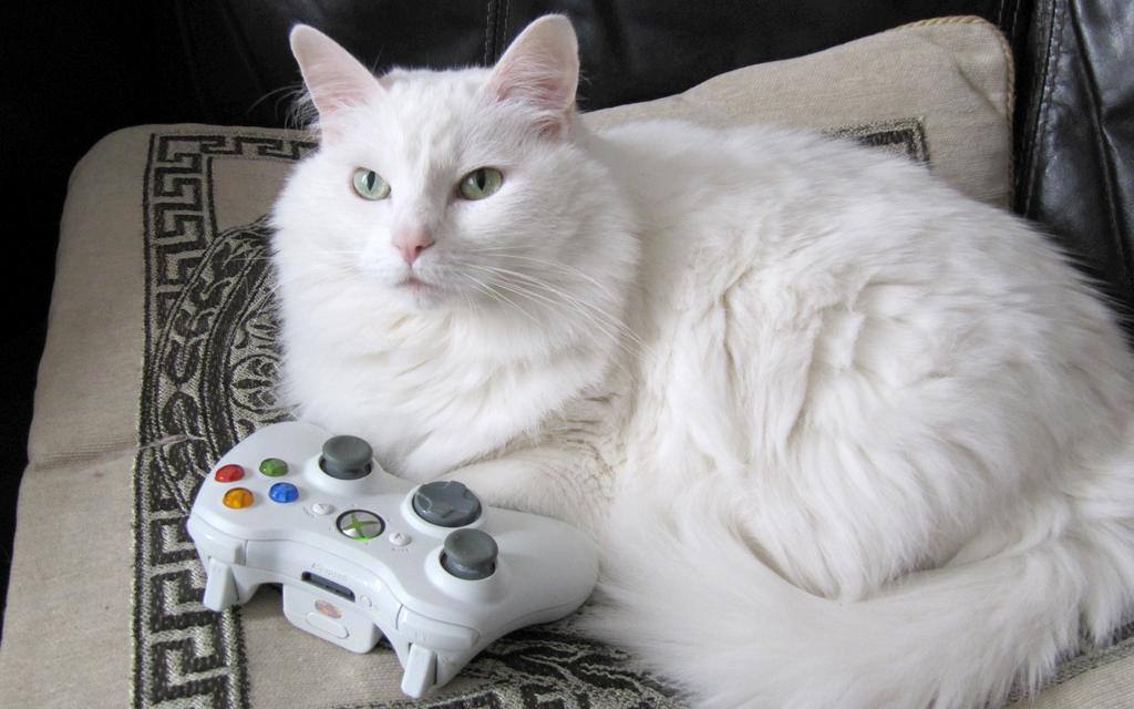 Giocare con il gatto idee per divertirsi col proprio for Animali pucciosi