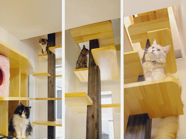 The cats' house, una vera reggia per felini
