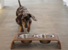Ciotole di design: anche a cani e gatti piace lo stile