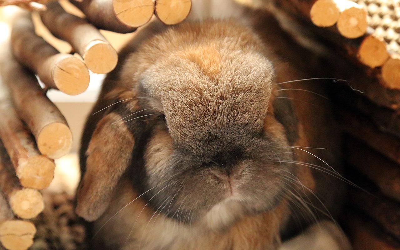 Giocare con il coniglio, alcune idee per socializzare assieme