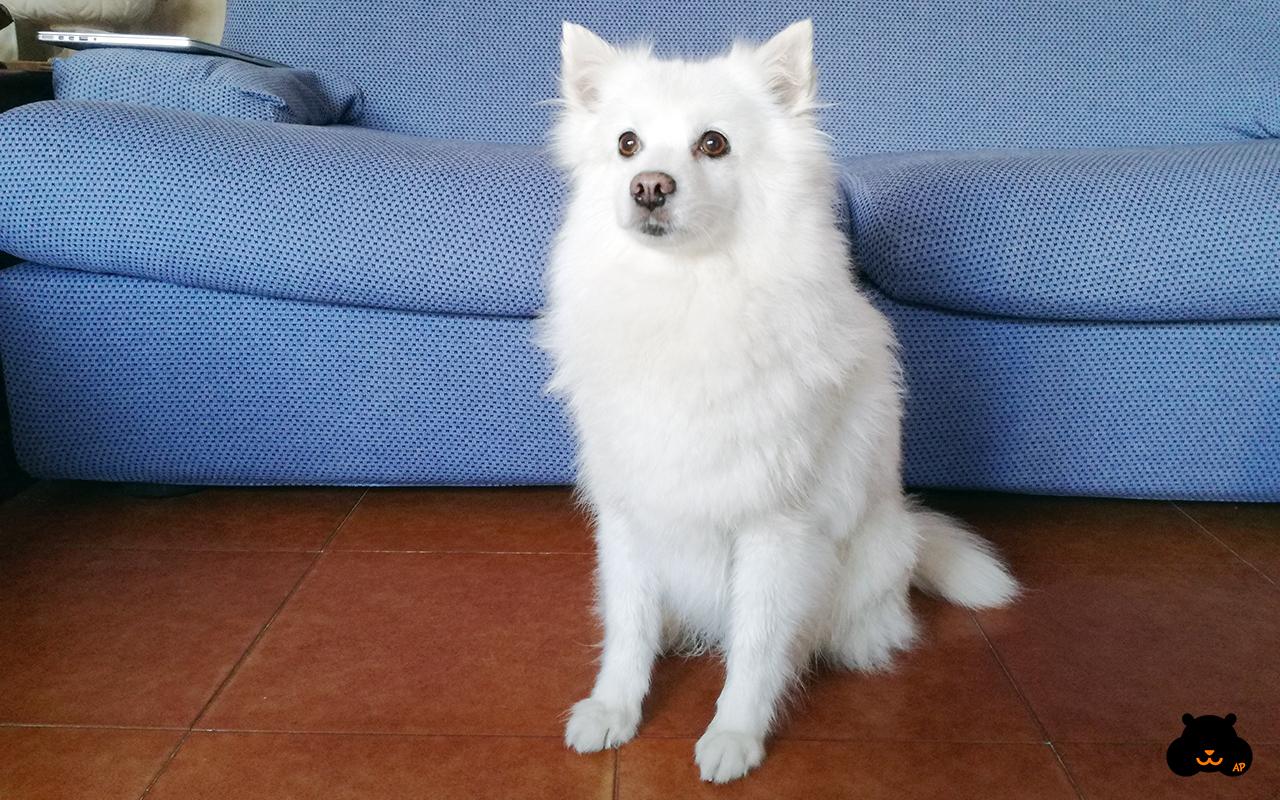 Come lavare il cane in casa guida per umani animali - Lavare i tappeti in casa ...