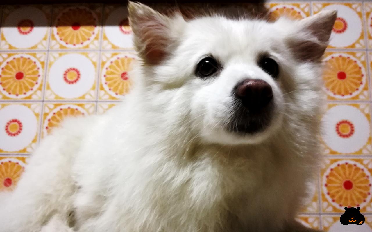 Come lavare il cane in casa: guida per umani