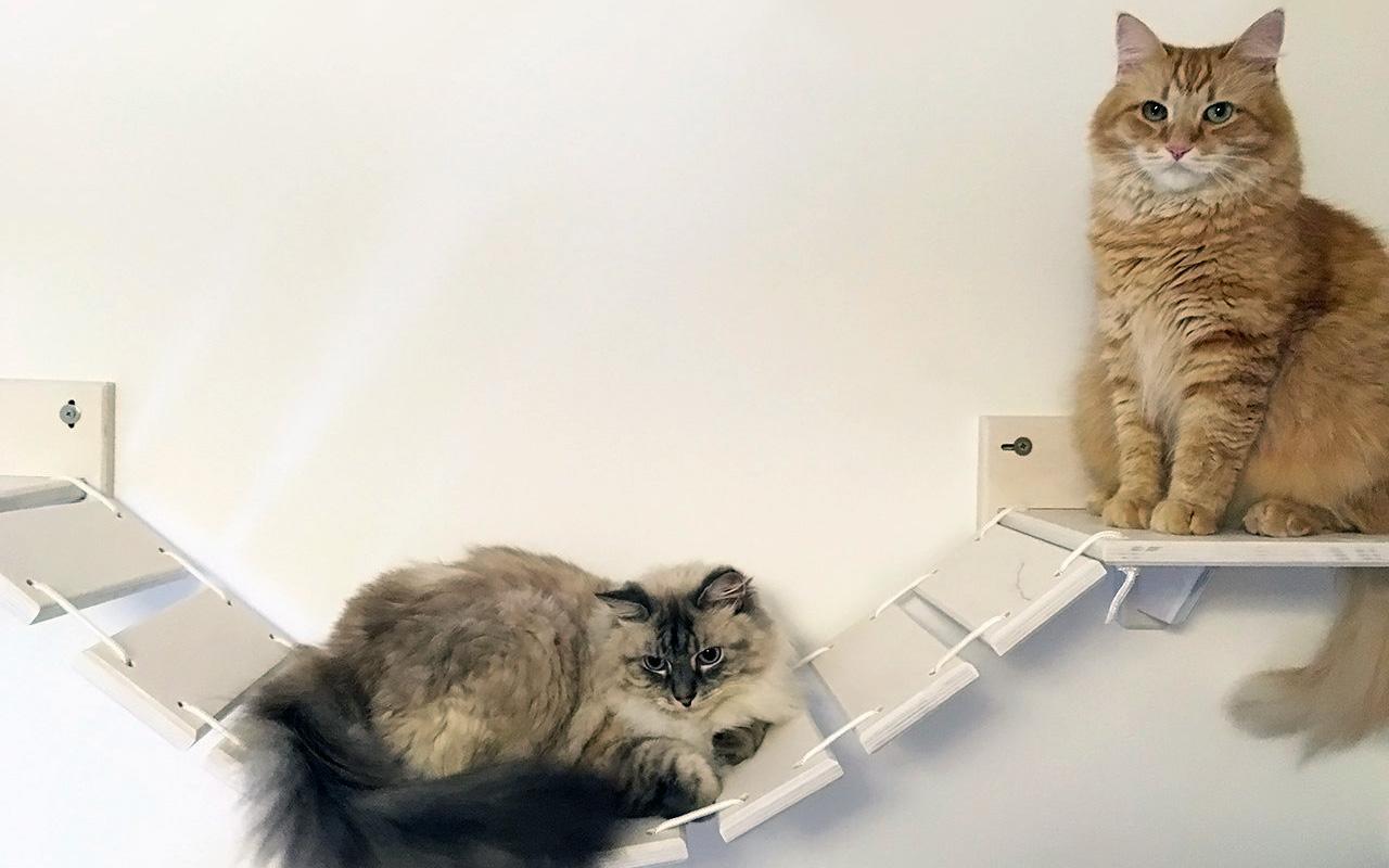 Mensole per gatti, come disporle e dove trovarle