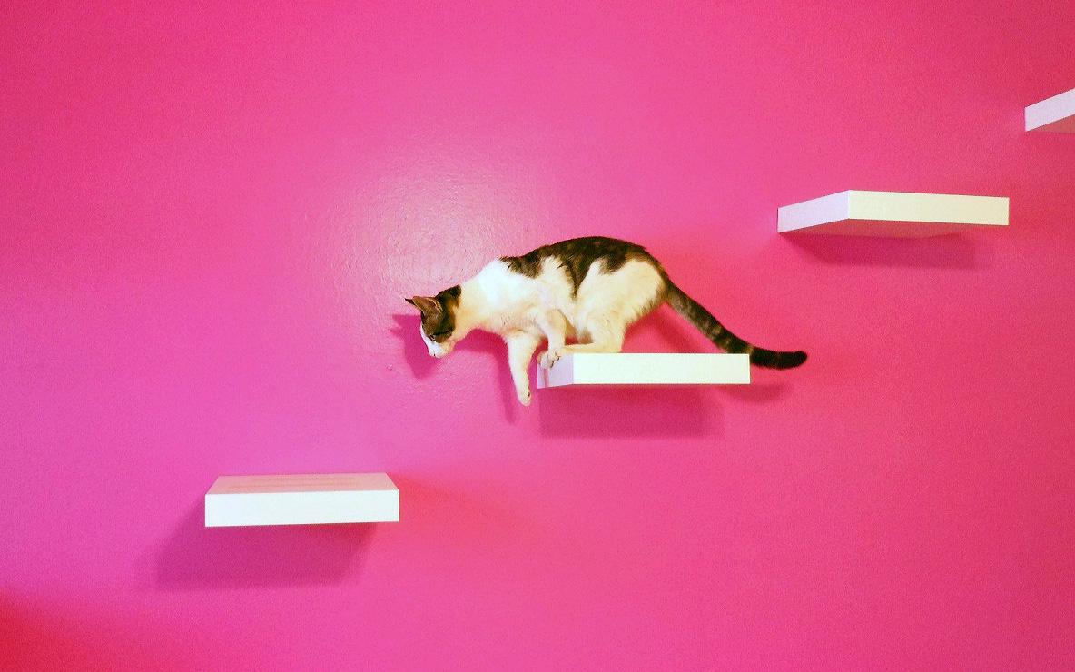 Mensole per gatti come disporle e dove trovarle animali for Tiragraffi per gatti ikea