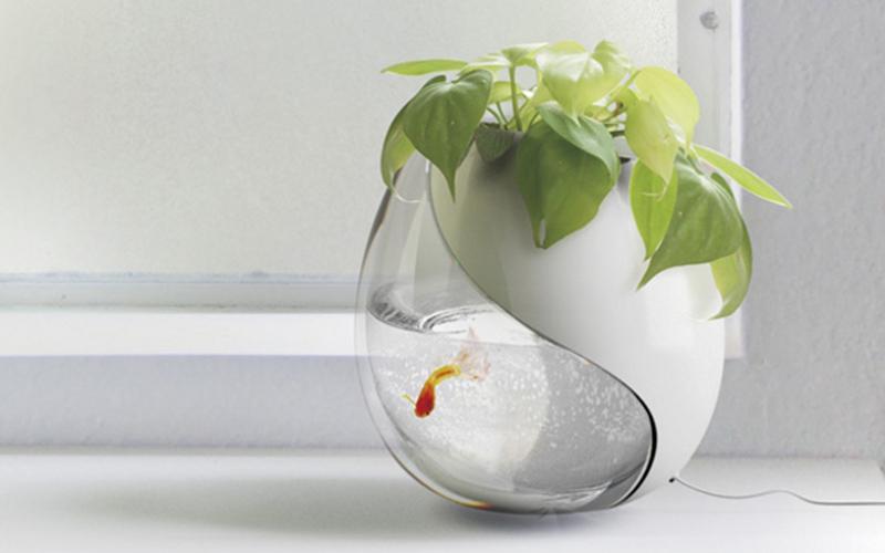 Bocce per pesci di design 5 vasche con stile animali for Vasca x pesci rossi