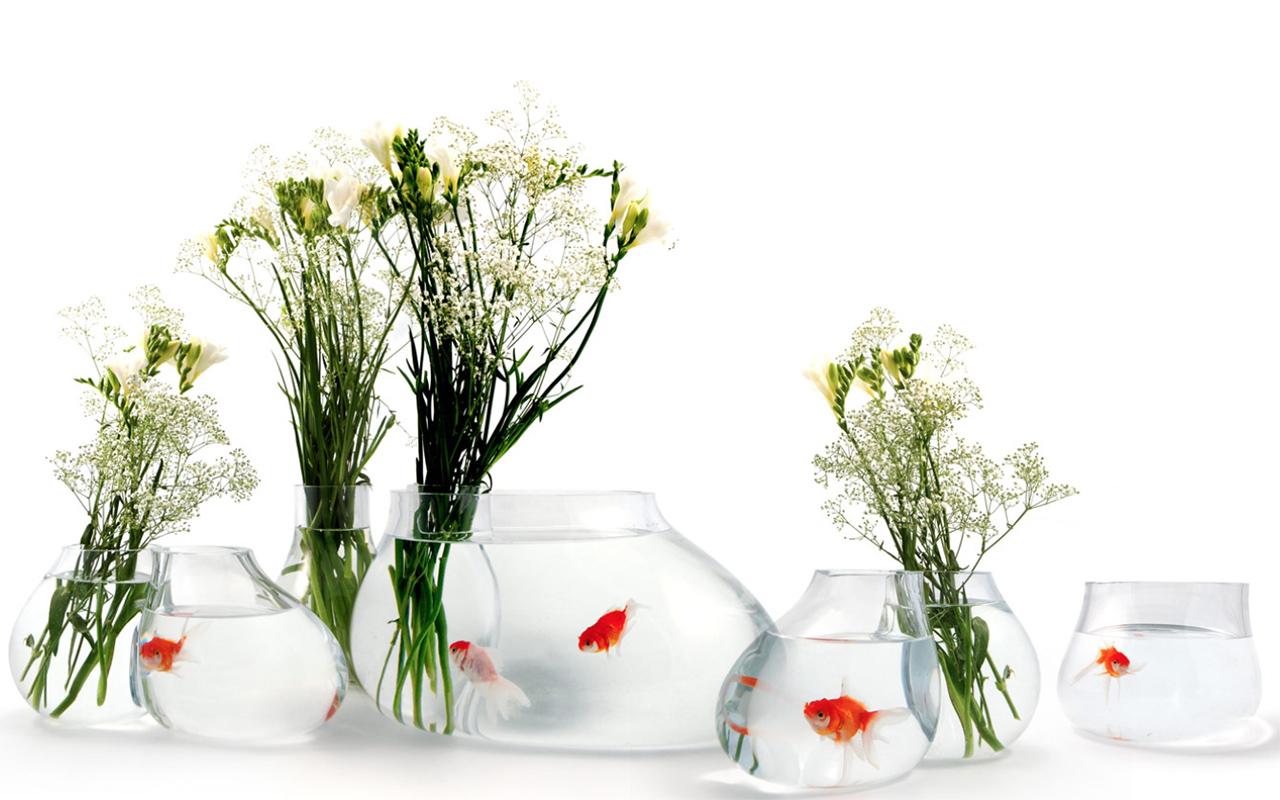 Bocce per pesci di design, 5 vasche con stile
