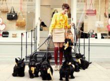 Collari e pettorine per cani di design: a spasso con stile!