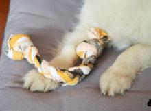 Come fare un gioco in stoffa per cani fai da te