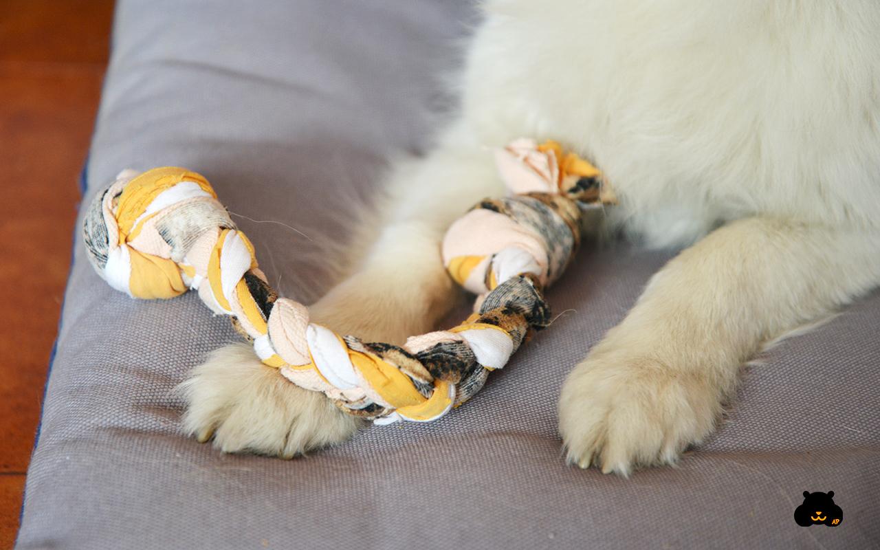 Come fare un gioco in stoffa per cani fai da te animali for Animali pucciosi