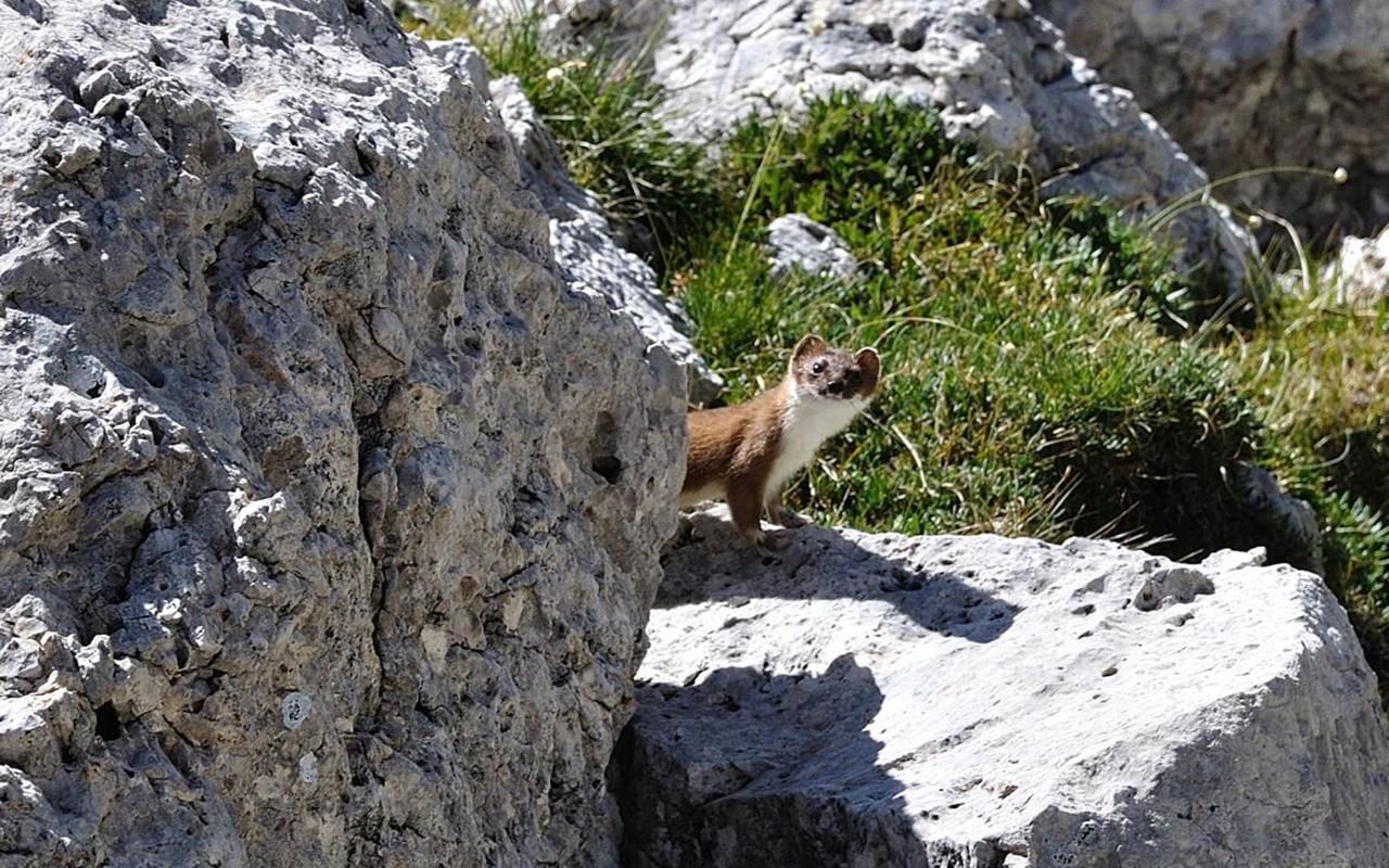 Parco nazionale dello Stelvio: tra i più antichi d'Italia