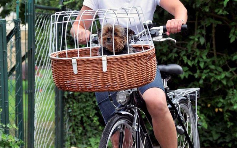 Portare il cane in bicicletta, ecco come - Idee Green