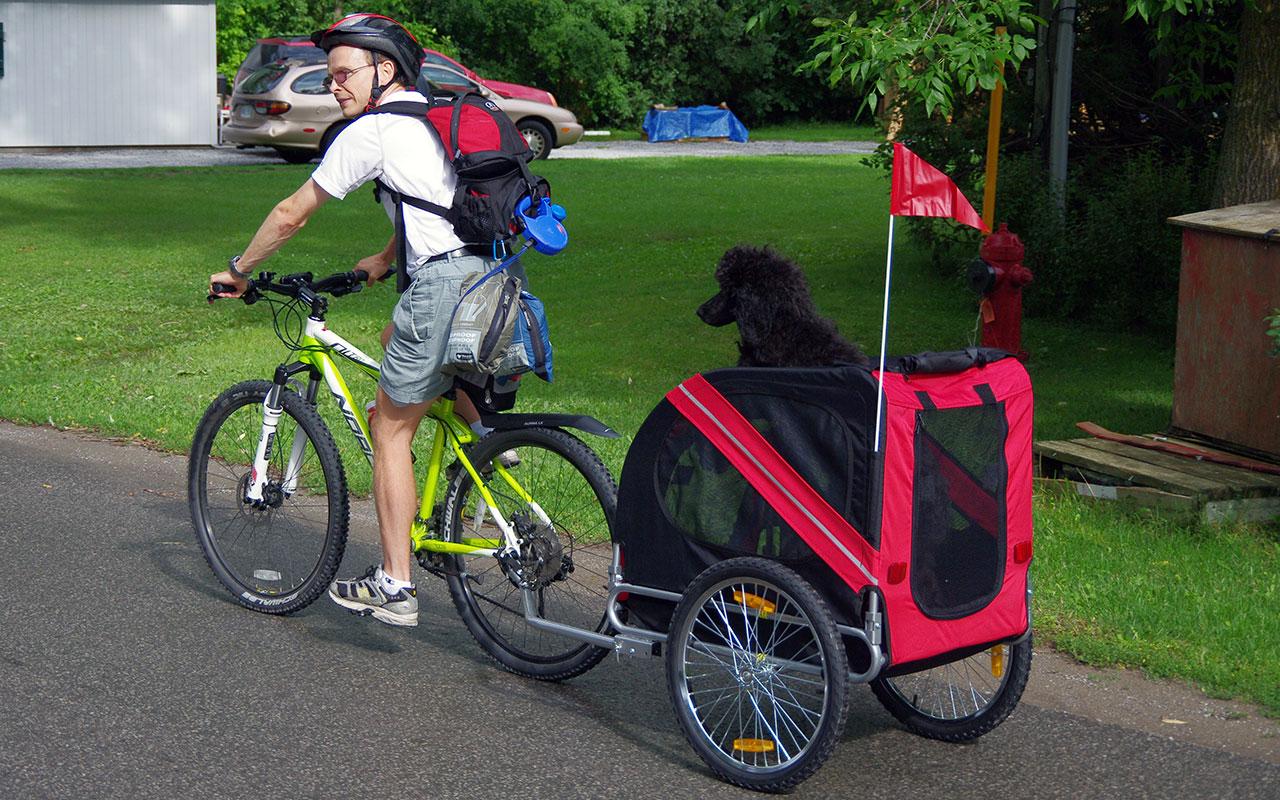In bicicletta con il cane cosa usare e cosa fare for Cani che non vogliono fare il bagno