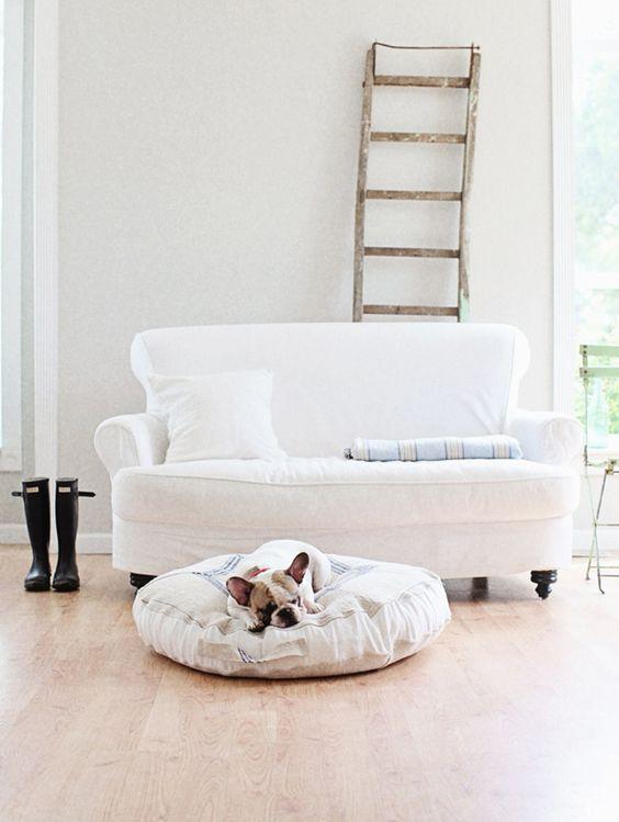 Ispirazioni di pet design | Stile nordico