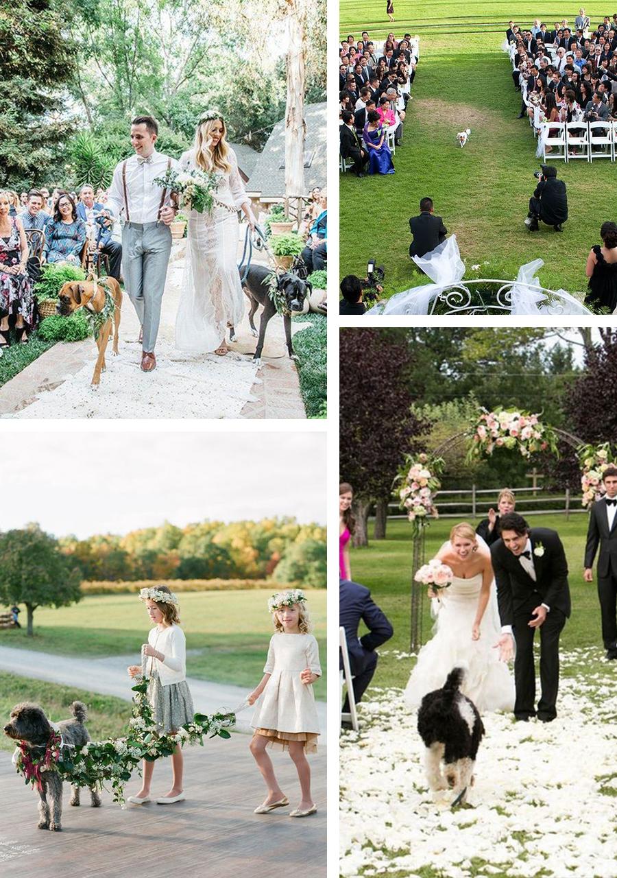 Matrimonio con il cane: idee e regole da seguire per una cerimonia perfetta!
