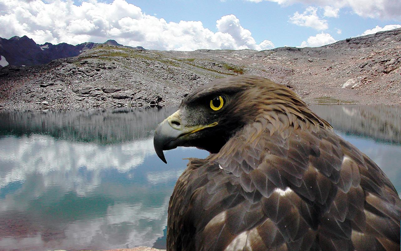 Parco nazionale del Gran Paradiso: gli animali del parco più antico d'Italia