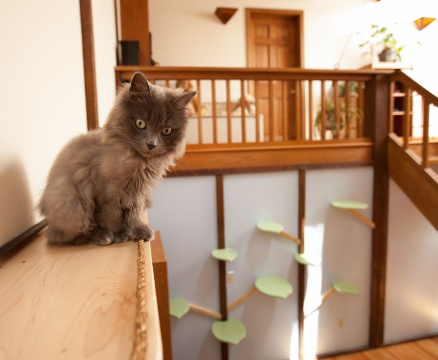 Arredare con il legno... Una casa a misura di gatti!