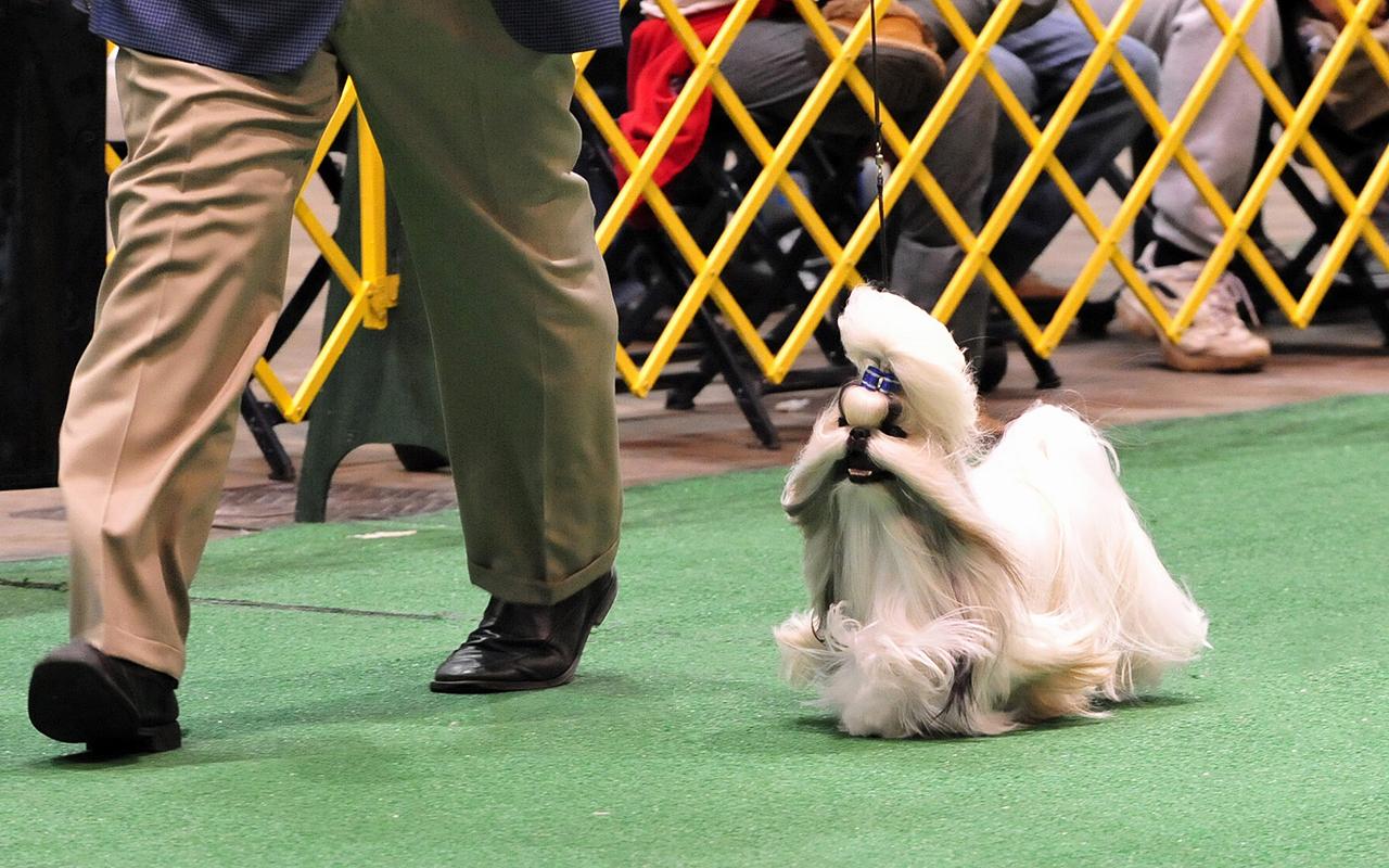 Voglio un cane mini toy! Ma esiste un cane di taglia così piccola?
