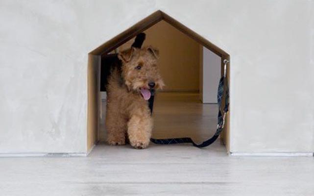 Una casa a prova di cane cosa non deve mancare animali pucciosi