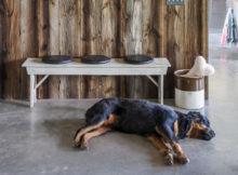 Una casa a prova di cane, cosa non deve mancare