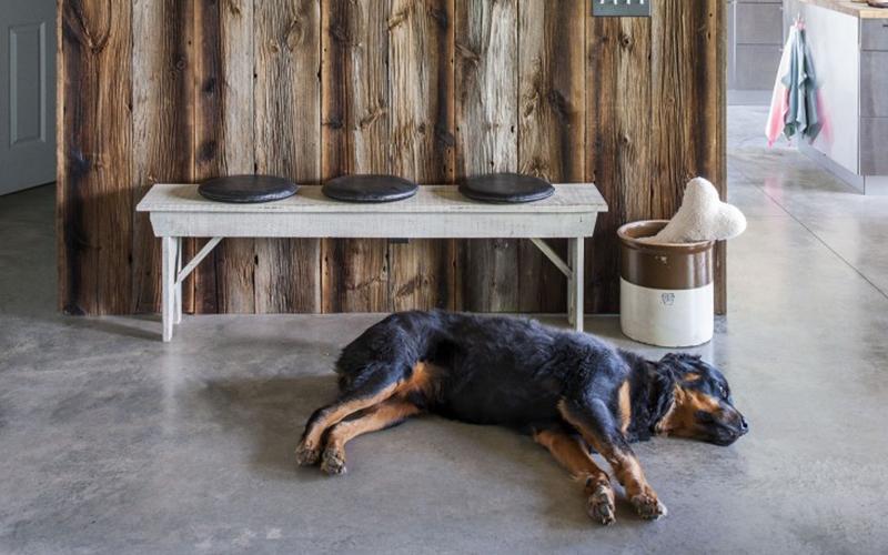 Una casa a prova di cane cosa non deve mancare animali pucciosi - Cosa non deve mancare in casa ...