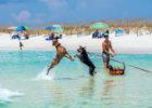 Spiagge attrezzate per cani, dove trovarle