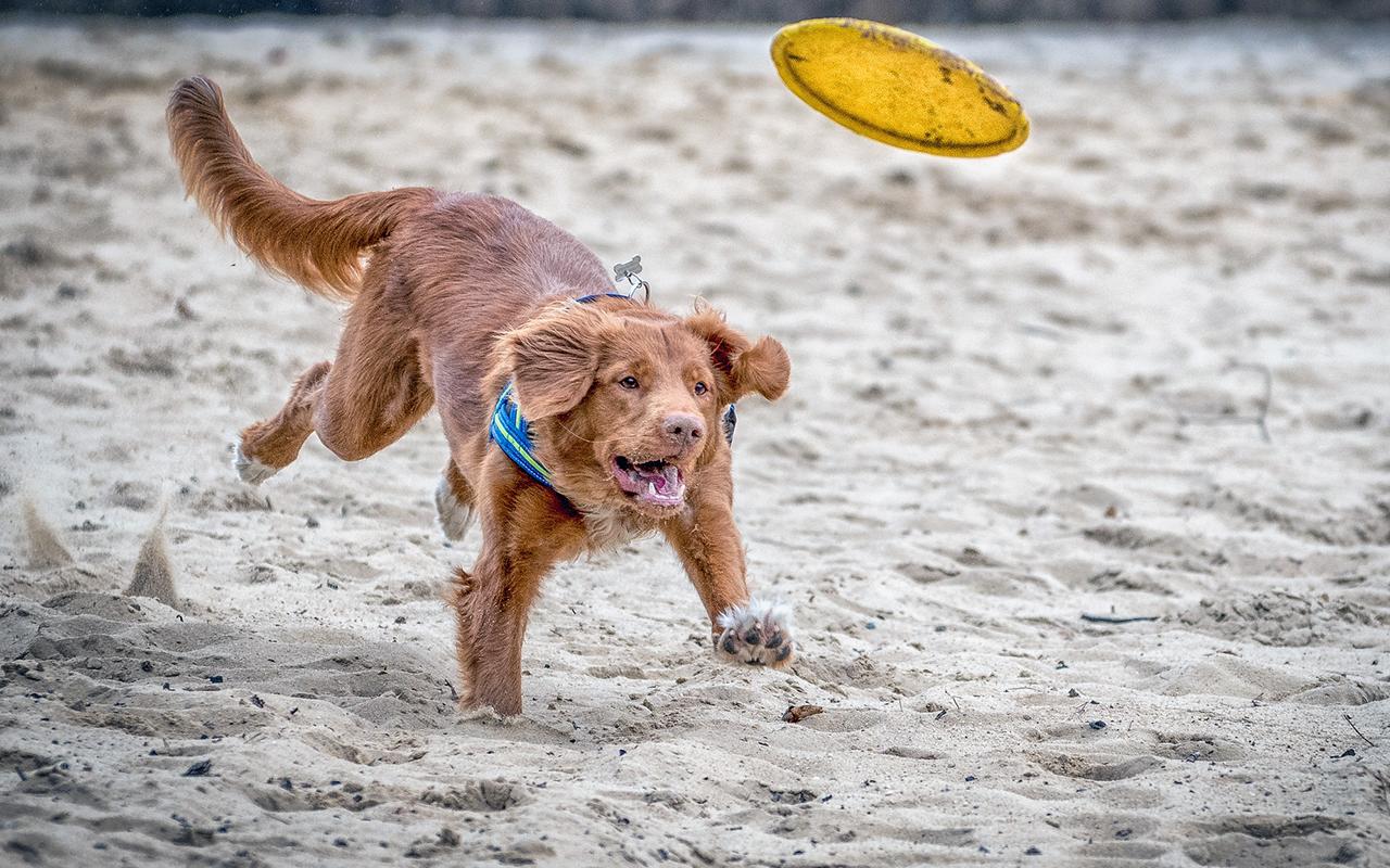 Spiagge attrezzate per cani animali pucciosi 5 animali for Animali pucciosi